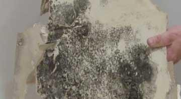 Mold & Mildew Resistant